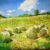 Le bellezze della natura Acrilico su tela fissata al compensato