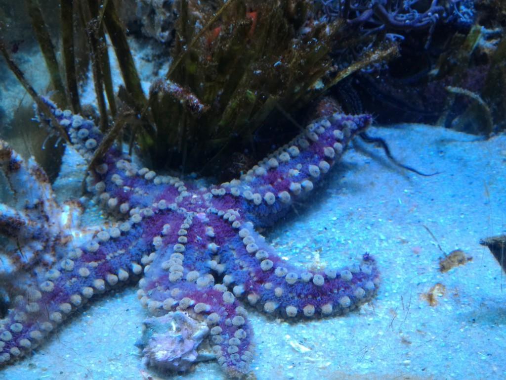 Quadri vendita online barcellona acquario for Vendita pesci marini tropicali online