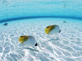 Sfondo pc maldive desktop e mobile di spiaggia tropicale maldive. Mediajob.eu - il sito d'arte e degli artisti.