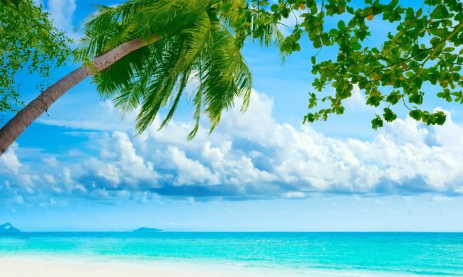 Tropici Arte E Pittura Vendita Quadri Dipinti Disegni Online Di