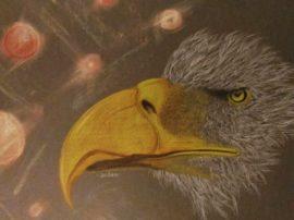 Aquila. Matite colorate e gessetti su cartoncino colorato