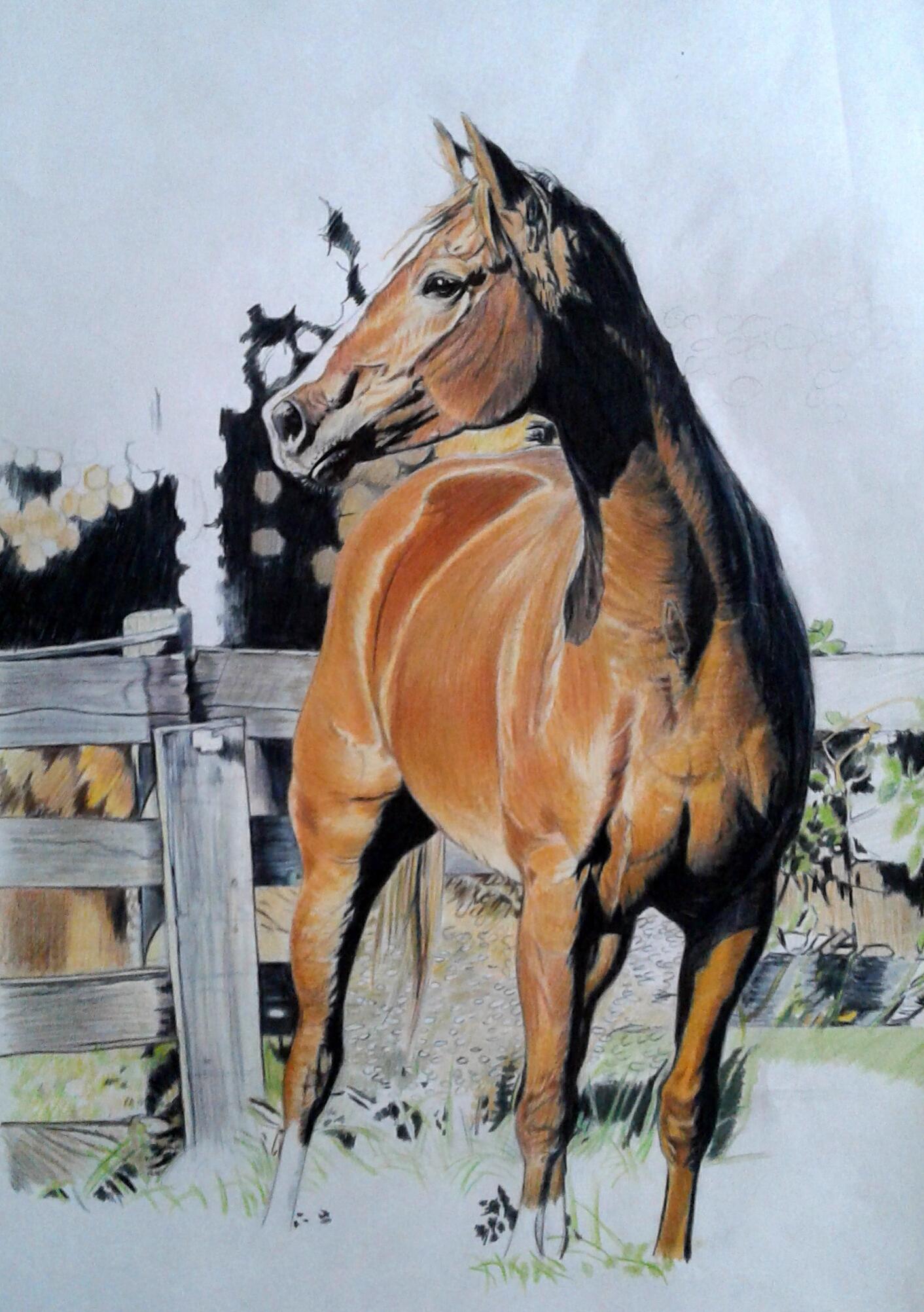 Quadri vendita online disegno mio gatto arancio for Cavallo disegno a matita