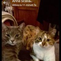 Foto del profilo di Franco Guerrini